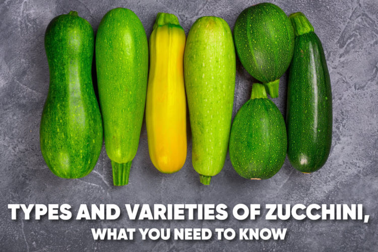 Types and Varieties of Zucchini, What You Need To Know, photo by hkadmin
